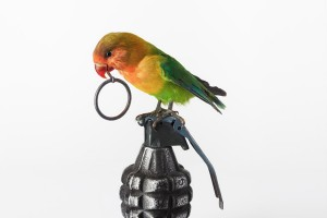 Lovebird with Grenade, 2012, courtesy Nancy Fouts