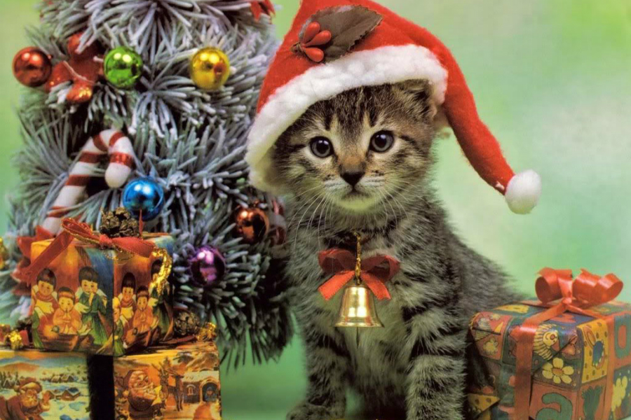 The Double Negative » Hey It's Christmas! Here's A Cat.