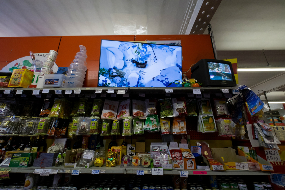 Ian Cheng, Something Thinking of You, 2015. Installation view at Hondo Chinese Supermarket for Liverpool Biennial 2016. Photo: Mark McNulty