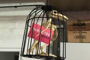 Paradise-Works-slider-parrot