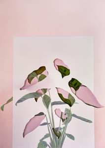 Calatheas, 2018. Work In Process, The Photographers' Gallery, London
