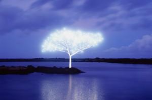 Tree of Life © Jeong Lok Lee