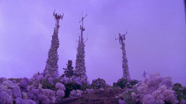 Jorgeácome,Flores