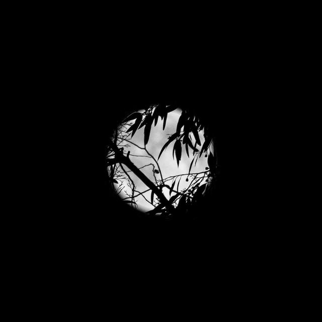 moon_46_980px
